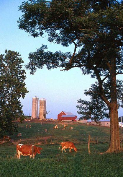 417px-Dairy_farm