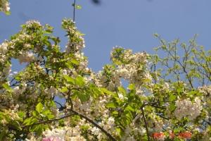 2009 spring 063