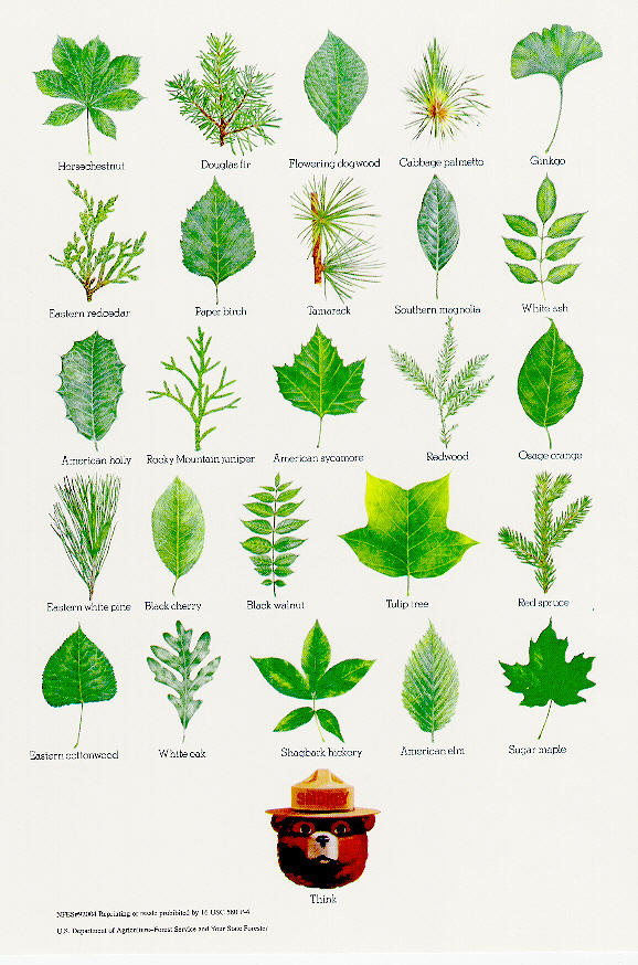 smokey_leaf